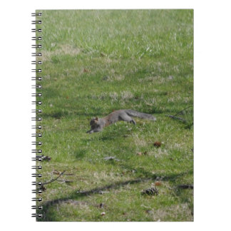 Just squirrely notebook