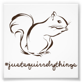 Just Squirrely Things Squirrel Photo