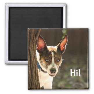 Just Stopping for a Quick Hello: Peeping Terrier Magnet