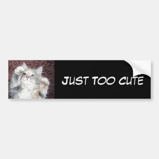 Just too cute kitten bumper sticker