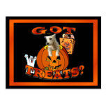 Just Too Cute Westie Puppy, Peeking Out of Pumpkin Post Cards