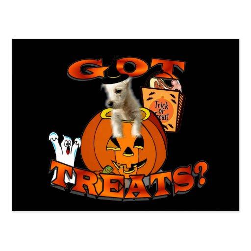 Just Too Cute Westie Puppy, Peeking Out of Pumpkin Postcard