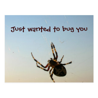Just Wanted to Bug You Postcard