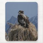 Juvenile Bald Eagle by the Shore Mouse Pads