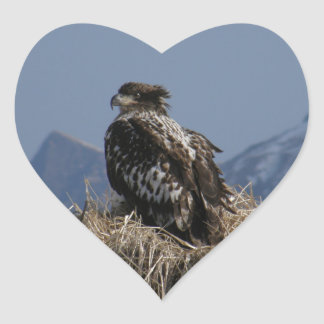Juvenile Bald Eagle by the Shore Heart Sticker