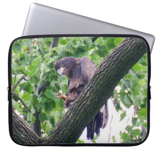 Juvenile Bald Eagle Computer Sleeve