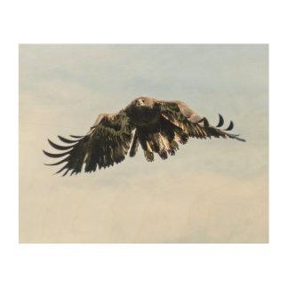 Juvenile Bald Eagle in Flight Wood Wall Art