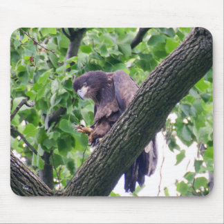 Juvenile Bald Eagle Mouse Pad