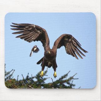 Juvenile Bald Eagle taking off Mouse Pad