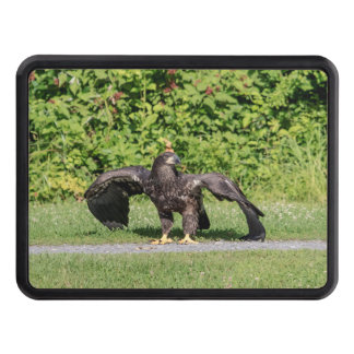Juvenile Bald Eagle Trailer Hitch Cover
