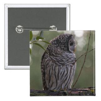 Juvenile Barred Owl (Strix varia) 2 2 Inch Square Button