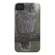 Juvenile Barred Owl (Strix varia) 2 iPhone 4 Cover