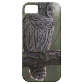 Juvenile Barred Owl (Strix varia) 2 iPhone SE/5/5s Case
