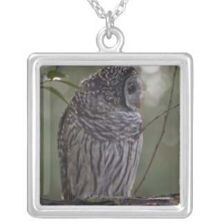 Juvenile Barred Owl (Strix varia) 2 Silver Plated Necklace