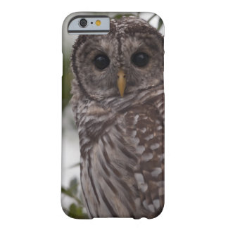 Juvenile Barred Owl (Strix varia) Barely There iPhone 6 Case