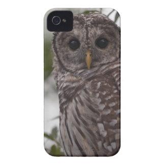 Juvenile Barred Owl (Strix varia) iPhone 4 Case