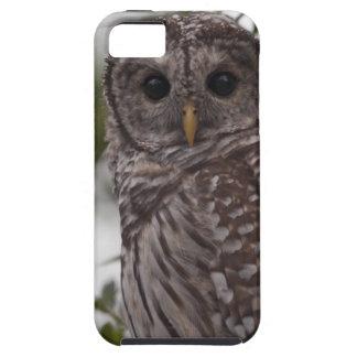 Juvenile Barred Owl (Strix varia) iPhone SE/5/5s Case
