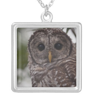Juvenile Barred Owl (Strix varia) Silver Plated Necklace