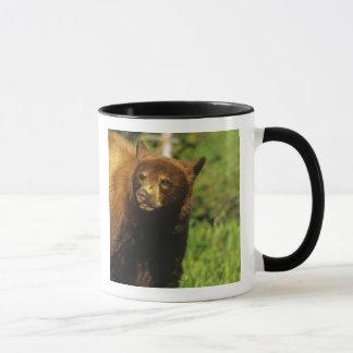 Juvenile black bear at Waterton Lakes National Mug