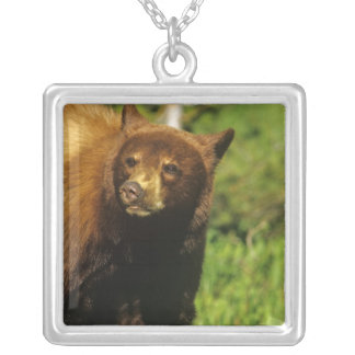 Juvenile black bear at Waterton Lakes National Silver Plated Necklace