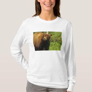 Juvenile black bear at Waterton Lakes National T-Shirt