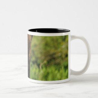 Juvenile black bear at Waterton Lakes National Two-Tone Coffee Mug