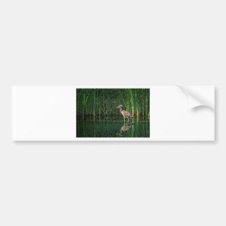 Juvenile Black Crowned Night Heron Bumper Sticker