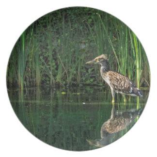 Juvenile Black Crowned Night Heron Melamine Plate