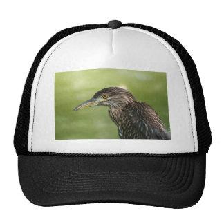 Juvenile Black Crowned Night Heron Mesh Hat