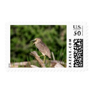 Juvenile Black Crowned Night Heron Postage