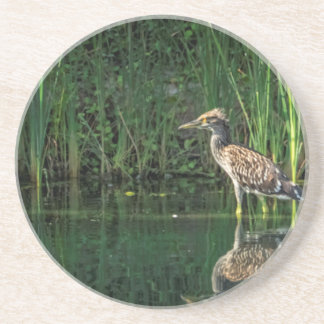 Juvenile Black Crowned Night Heron Sandstone Coaster