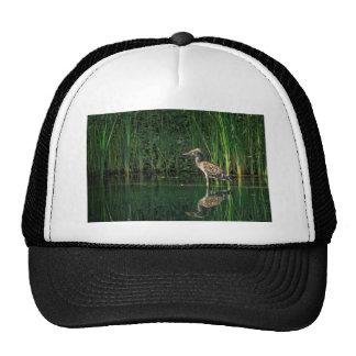 Juvenile Black Crowned Night Heron Trucker Hat