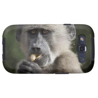 Juvenile Chacma baboon (Papio ursinus) eats nuts Samsung Galaxy SIII Covers