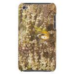 juvenile Clark's Anemonefish (Amphiprion) iPod Touch Case