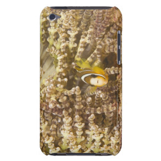 juvenile Clark's Anemonefish (Amphiprion) Barely There iPod Covers