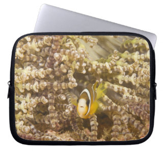 juvenile Clark's Anemonefish (Amphiprion) Computer Sleeve