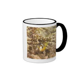 juvenile Clark's Anemonefish (Amphiprion) Ringer Coffee Mug