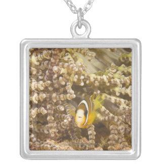 juvenile Clark's Anemonefish (Amphiprion) Square Pendant Necklace