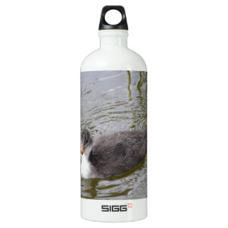 Juvenile Coot Aluminum Water Bottle