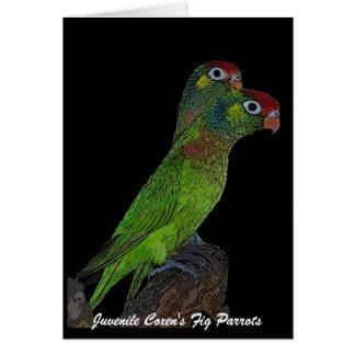 Juvenile Coxen's Fig Parrots card