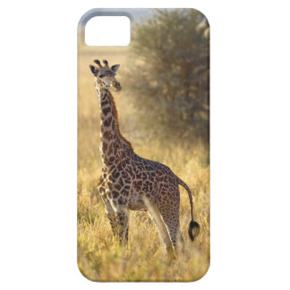 Juvenile Giraffe, Giraffa camelopardalis 2 iPhone 5 Cases