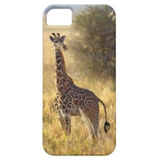 Juvenile Giraffe, Giraffa camelopardalis 2 iPhone 5 Covers