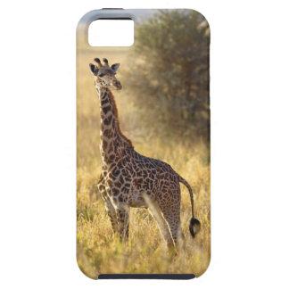 Juvenile Giraffe, Giraffa camelopardalis 2 iPhone 5 Case