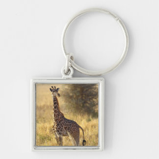 Juvenile Giraffe, Giraffa camelopardalis 2 Keychain