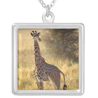 Juvenile Giraffe, Giraffa camelopardalis 2 Square Pendant Necklace