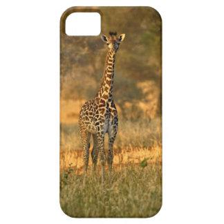 Juvenile Giraffe, Giraffa camelopardalis iPhone 5 Cover