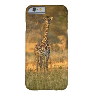 Juvenile Giraffe, Giraffa camelopardalis iPhone 6 Case