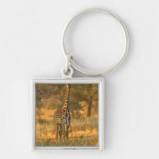 Juvenile Giraffe, Giraffa camelopardalis Keychain