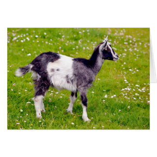 Juvenile goat on grass card