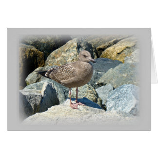 Juvenile Great Black-Backed Gull Card